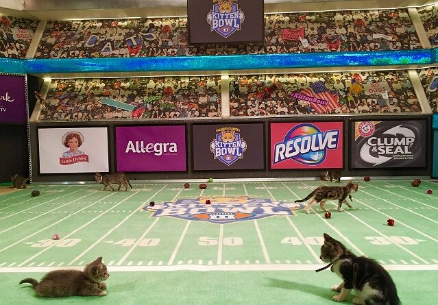 Hallmark Channel Gears Up for Its Next Kitten Bowl