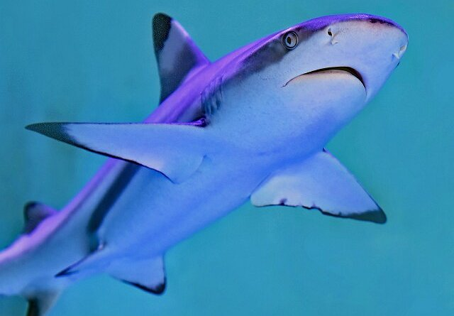 "Paul de Gelder Dives Into 30th Anniversary Celebration of Discovery's ""Shark Week"""