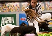 "TV Maven: ""Puppy Bowl IV"": Animal Planet's Paw Up on Super Bowl Sunday"